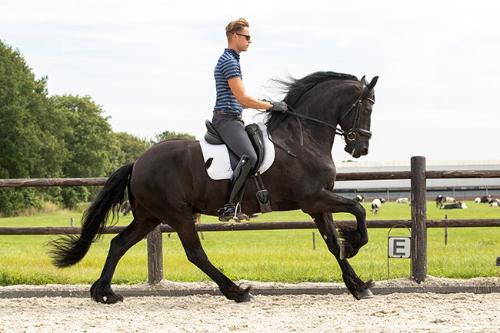 horse photo 9