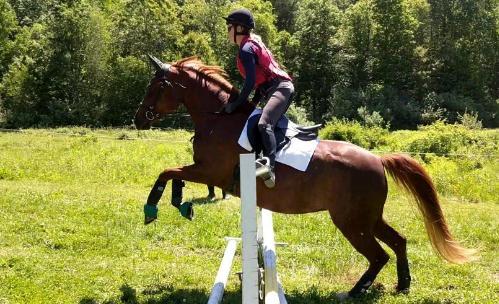 Arabian Horse Association mare