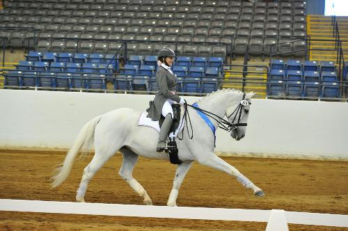 dressage horse trained to grand prix