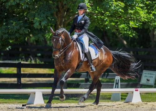 dressage horse trained to intermediate 1
