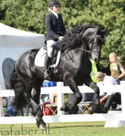 trained to third level level dressage