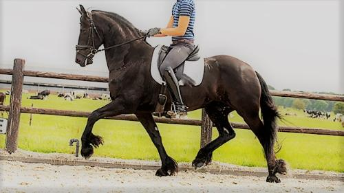 trained to second level level dressage