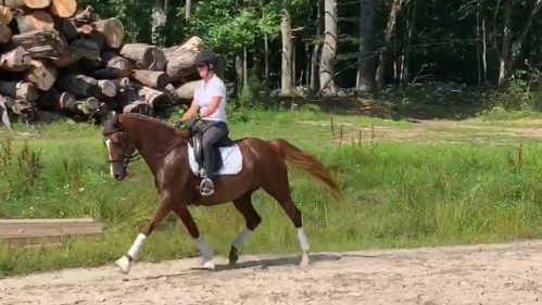 dressage horse for sale in New Hampshire United States