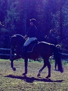 dressage horse for sale in New Brunswick Canada