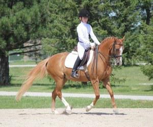 Cross mare for sale