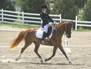 dressage horse for sale in Minnesota United States