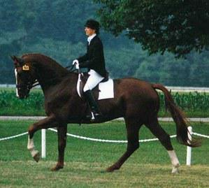 dressage horse for sale in Wisconsin United States