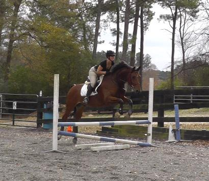 dressage horse for sale in Georgia United States