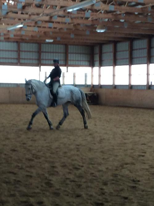 Other mare for sale