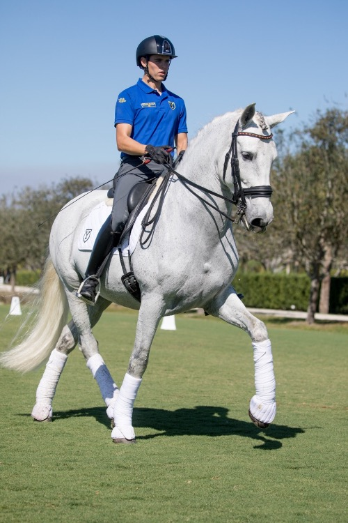 dressage horse for sale in Florida United States