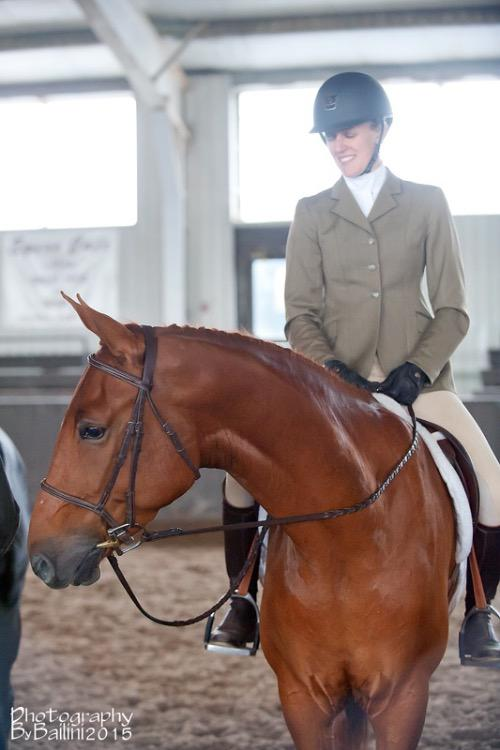 Russian Warmblood mare for sale