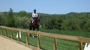 dressage horse for sale in Vermont United States
