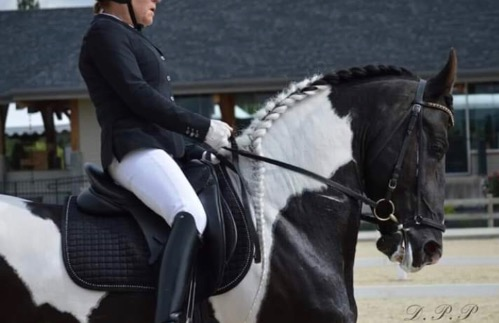 dressage horse for sale in Indiana United States