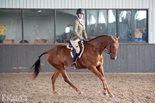 dressage horse trained to training level