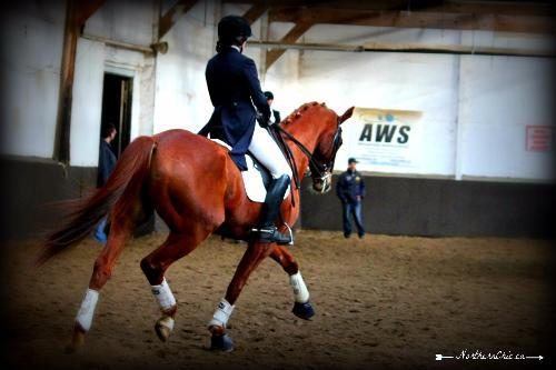 dressage horse for sale in Ontario Canada