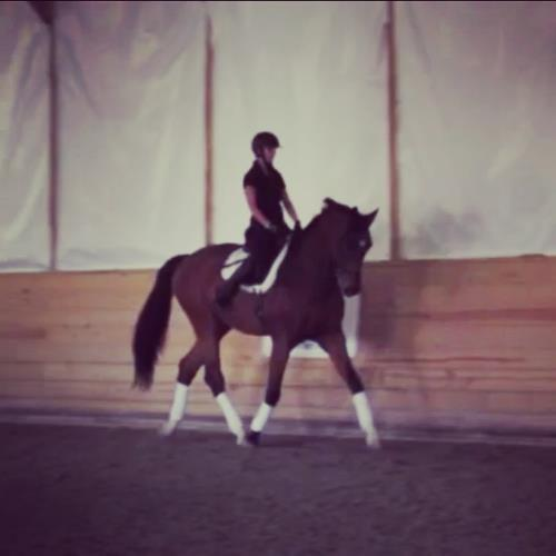 dressage horse for sale in New Jersey United States
