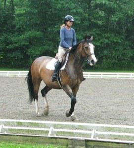 dressage horse for sale in United States