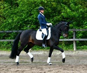 dressage horse for sale in Germany