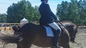 dressage horse for sale in Alberta Canada