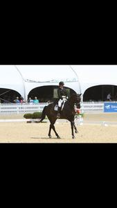 dressage horse for sale in Quebec Canada