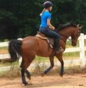 dressage horse trained to second level