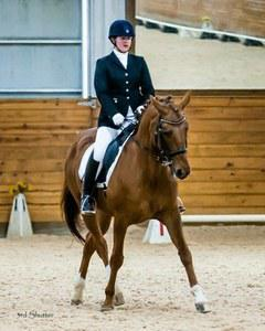dressage horse for sale in Ohio United States