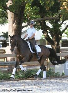 dressage horse trained to fourth level
