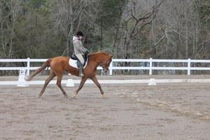 Oldenburg mare for sale