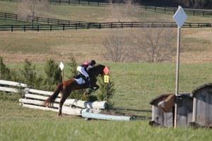 dressage horse for sale in Virginia United States