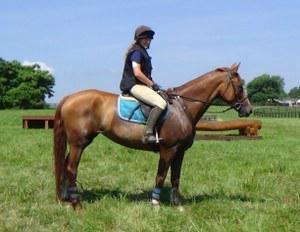 The Oldenburg Horse Breeders Society mare