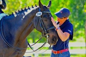 dressage horse for sale in Kentucky United States